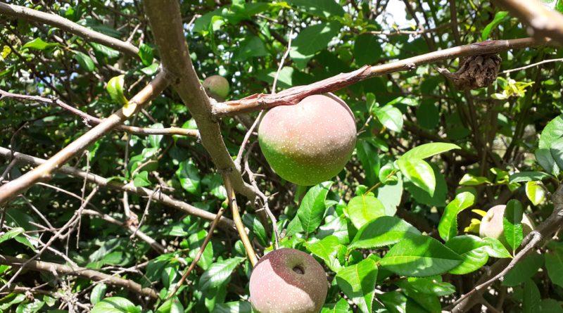 07/2021 I frutti dell'Estate